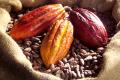 Cabosses- et feves de cacao