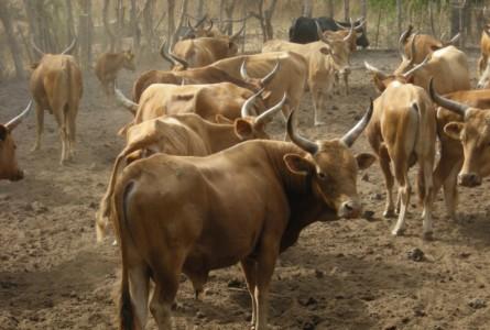 Sénégal : Communiqué de la réunion interministérielle sur le financement de l'élevage